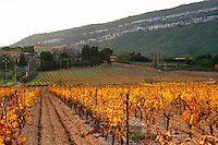 Chateau Pech-Latt. Near Ribaute. Les Corbieres. Languedoc. France. Europe. Vineyard.
