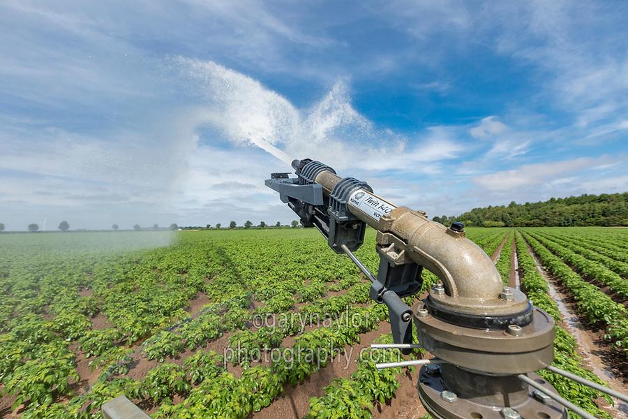 Irrigating potatoes with a rain gun - Lincolnshire, June