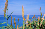 Blue Mediterranean sea coastal view through grassy vegetation, Sicily, Italy