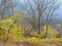 The last remnants of fall show on the understory shrubs and trees, Rock Run Forest Preserve, Will County, Illinois