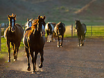 Horses coming up the lane with strong back light from the morning sun.