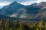 Never Summer Mountains, Grand Ditch, beetle kill, trees, forest, mountain pine beetle, natrual history, nature, travel, October, afternoon, Rocky Mountain National Park, Colorado, USA