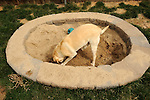 Dog in doggy digging pit.