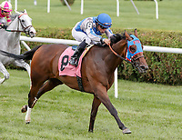 Length (no. 8), ridden by Joel Rosario and trained by William Mott, wins Race 5 July 29 at Saratoga Racecource, Saratoga Springs, NY.  (Bruce Dudek/Eclipse Sportswire)
