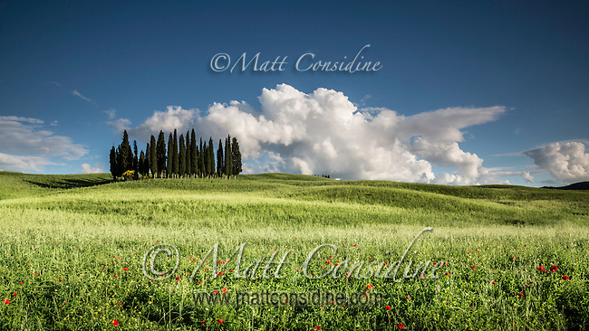 Copse of Cypress pines between rolling hills. (Photo by Travel Photographer Matt Considine)