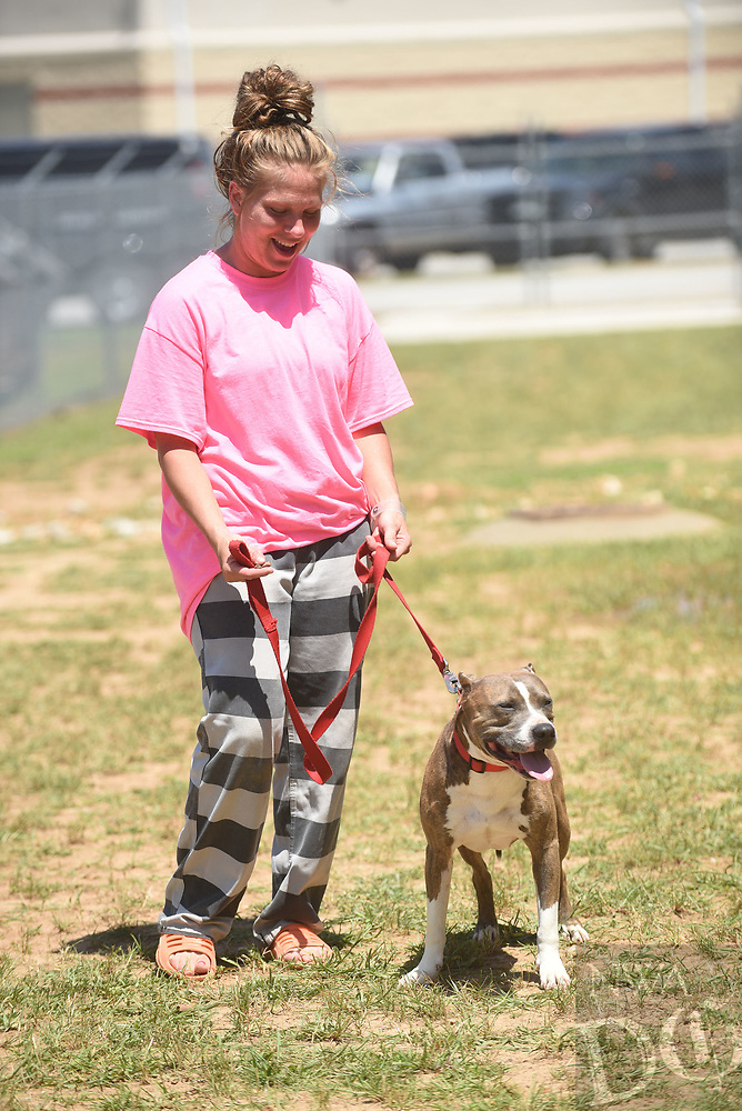 NWA Democrat-Gazette/FLIP PUTTHOFF <br />Tanis Whaley (cq), an inmate at the Benton County Jail, walks Tuesday July 11 2017 outside of a cell pod with Mr. Bean, a New Leash on Life canine.