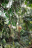 Tropical Rainforest Glasshouse (formerly Le Jardin d'Hiver), 1936, René Berger, Jardin des Plantes, Museum National d'Histoire Naturelle, Paris, France. General view of the luxuriant tropical vegetation beneath the glass and metal roof structure of the Art Deco style glasshouse, seen from the cave. Creeping plants and green leaves, seen against the light, form the foreground.