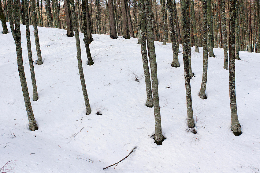 A view of a forest in Aralar mountains is seen on January 28, 2013, in the Basque Country. (Ander Gillenea / Bostok Photo)