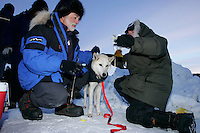"Sunday March 11, 2007   ----   Volunteer drug testers, known as the "" P-Team"" Roy Cantalano (left) and Melanie Hull take a urine sample from a Lance Mackey dog at the Unalakleet checkpoint on Sunday evening."