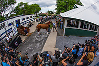 ELMONT, NY - JUNE 06: Triple Crown hopeful Justify comes off the van to trainer Bob Baffert at Belmont Park on June 06, 2018 in Elmont, New York. (Photo by Alex Evers/Eclipse Sportswire/Getty Images)