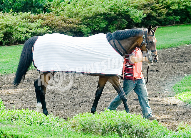 Clarinet before The John W. Rooney Memorial Stakes at Delaware Park on 6/2/12