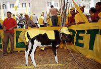 Il vitello Giusto alla manifestazione della Coldiretti sulle quote latte davanti a Montecitorio, 20 luglio 2010, durante la discussione sulla manovra economica del governo..UPDATE IMAGES PRESS/Riccardo De Luca