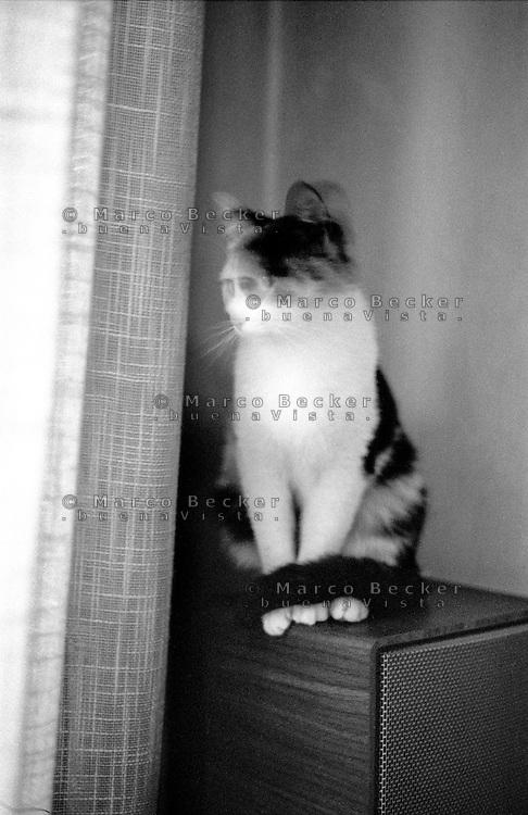 Gatto, cat