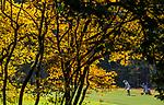Valkenswaard  - hole 17 met geel gekleurde krentenboom  ,  Eindhovensche Golf Club.   COPYRIGHT KOEN SUYK