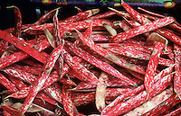 FOOD GROUPS: VEGETABLES<br /> Cranberry Bean Pods<br /> Borlotti Beans<br /> They are a good source of Protein, Thiamin, Magnesium, Phosphorus, Potassium, Copper and Manganese, and a very good source of Dietary Fiber and Folate.