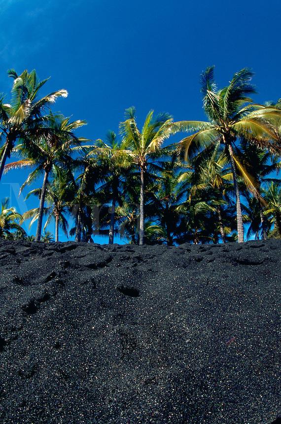 Black sand beach with coconut palm trees. Punaluu, Hawaii.