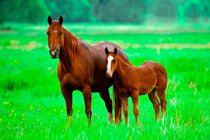 Horses near Wind Cave National Park, Black Hills, South Dakota USA
