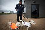 A man and his two dogs wearing home colours arriving at the stadium before AFC Fylde took on Aldershot Town in a National League game at Mill Farm, Wesham. The fixture was played against the backdrop of the total postponement of all Premier League and EFL football matches due to the the coronavirus outbreak. The home team won the match 1-0 with first-half goal by Danny Philliskirk watched by a crowd of 1668.