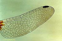 1O14-001b  Dragonfly - wing