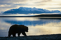 Coastal brown bear silhouetted against Naknek lake with the snow covered Mt. Katolinat in the distance, Katmai National Park, Alaska.