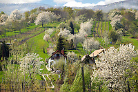 Korseg Vineyards in spring, Hungary
