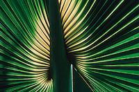 Palm frond, Tanzania, Africa
