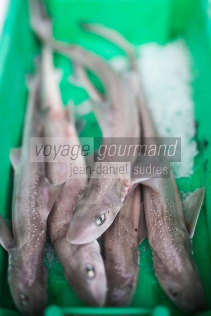 France, Pas-de-Calais (62), Boulogne-sur-Mer:  Rousettes -  Etal des pêcheurs au port de pêche, Vente directe // France, Pas de Calais, Boulogne sur Mer:  Dogfish, Stall fishermen at the fishing port, direct sales