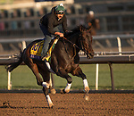 October 29, 2019 : Breeders' Cup Distaff entrant Elate, trained by William I. Mott, exercises in preparation for the Breeders' Cup World Championships at Santa Anita Park in Arcadia, California on October 29, 2019. Carolyn Simancik/Eclipse Sportswire/Breeders' Cup/CSM
