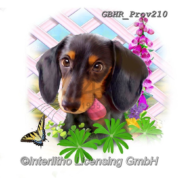 Howard, REALISTIC ANIMALS, REALISTISCHE TIERE, ANIMALES REALISTICOS, paintings+++++Black n tan dachshund,GBHRPROV210,#a#, EVERYDAY ,selfies