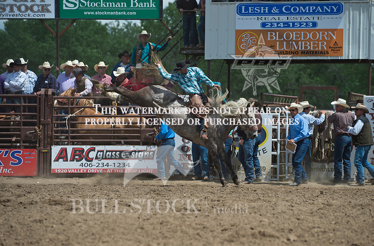 Kirk Thompson rides Wildman Rodeos #67 for a stock score of 76 at the Fraturity Bucking Horse ABHR event in Miles City MT.  Photo by Josh Homer/Bull Stock Media.