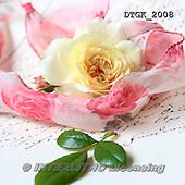 Gisela, FLOWERS, BLUMEN, FLORES, photos+++++,DTGK2008,#f#