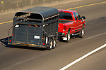 Red Dodge RAM towing stock trailer