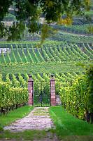 vineyard domaine faller weinbach schlossberg gc kaysersberg alsace france
