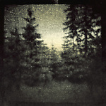 A blurred view through pine trees