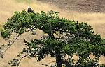 July 2012: San Juan Island, WA.