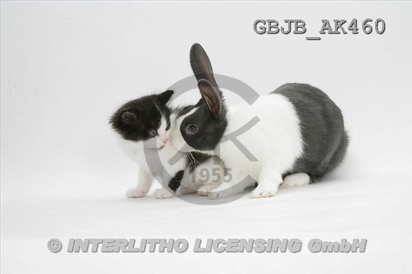 Kim, ANIMALS, fondless, photos(GBJBAK460,#A#) Tiere ohne Fond, animales sind fondo