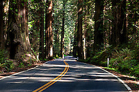Historic US 101 winds its way through redwood groves at the Avenue of the Giants near Weott, California