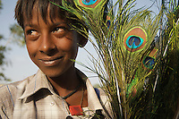 Boy selling Peacock feathers On the road from Bikaner to Mandava, Rajasthan India,