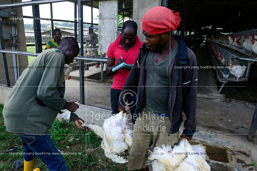 NIGERIA, Oyo State, Ibadan, loading of old layer hens for sale as live chicken on markets in Lagos / Legehennenhaltung, Verladung alter Legehennen zum Verkauf als Suppenhuhn auf Maerkten in Lagos