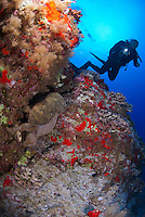 Diver at back wall molokini pointing his light torch a sponge crab.Second diver on the background. Maui Hawaii.