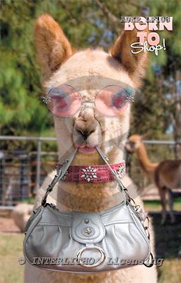 Samantha, ANIMALS,  photos+++++,AUKPLP108,#A# Humor, lustig, divertido