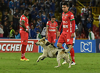 BOGOTA - COLOMBIA - 20 – 05 - 2017: Un perro corre en el campo de juego, durante partido de la fecha 19 entre Millonarios y Patriotas F.C., por la Liga Aguila I-2017, jugado en el estadio Nemesio Camacho El Campin de la ciudad de Bogota. / A dog runs in the field, during a match of the date 19th between Millonarios and Patriotas F.C., for the Liga Aguila I-2017 played at the Nemesio Camacho El Campin Stadium in Bogota city, Photo: VizzorImage / Luis Ramirez / Staff.