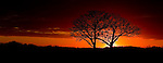 Photo of Twin Oaks outside Oregon, Wisconsin on 10/18/2010. (Photo by David Stluka)