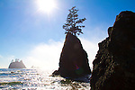 Olympic National Park, Shi Shi Beach, Point of the Arches, sea stacks, fog, Olympic Coast National Reserve, Washington State, Pacific Ocean, Pacific Northwest, U.S.A.,