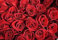 Día San Valentín 2013 / San Valentine's day 2013