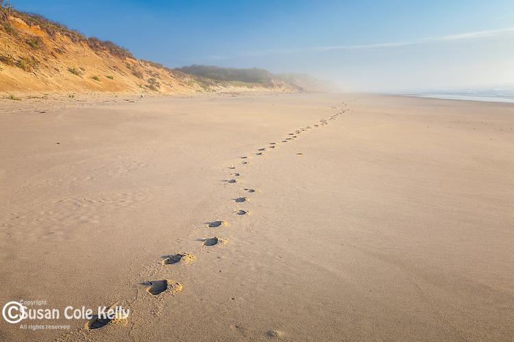 Footprints at Nauset Light Beach, Cape Cod National Seashore, Eastham, Massachusetts, USA