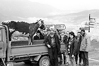 1994  Big Bertha returns to Sneem-stuffed! The celebrated 'Big Bertha', who reached 48 years of age and appeared in the Guinness Book of Records as the world's oldest cow died on New Year's Eve 1993. Here owner Jerome O'Leary had her professionally stuffed and she returned on March 16th in time for the Sneem parade which she was grand marshall the year before.  In this photograph the stuffed Big Bertha is photographed at Molls Gap on her way back to Sneem with her owner Jerome O'Leary and friends. She went on to raise much need funds to help cancer research. Photo: Don MacMonagle <br /> e: info@macmonagle.com