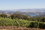 Sonoma wine country, DH Gustavson vineyard with Lake Sonoma in the background, off Skaggs Springs Road
