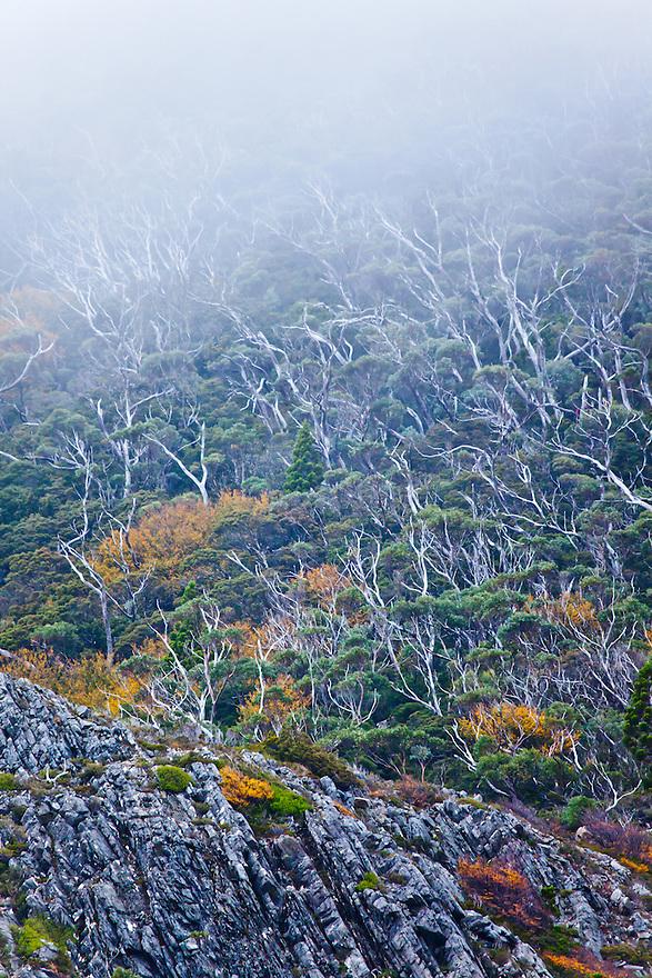 Tasmania Australia