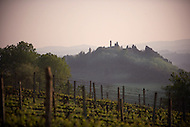 A vineyard in Tuscany Italy.